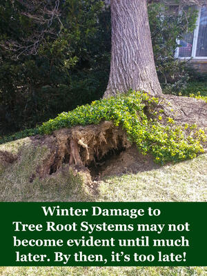 Winter Storms Lead to Hidden Dangers uprooted tree root system