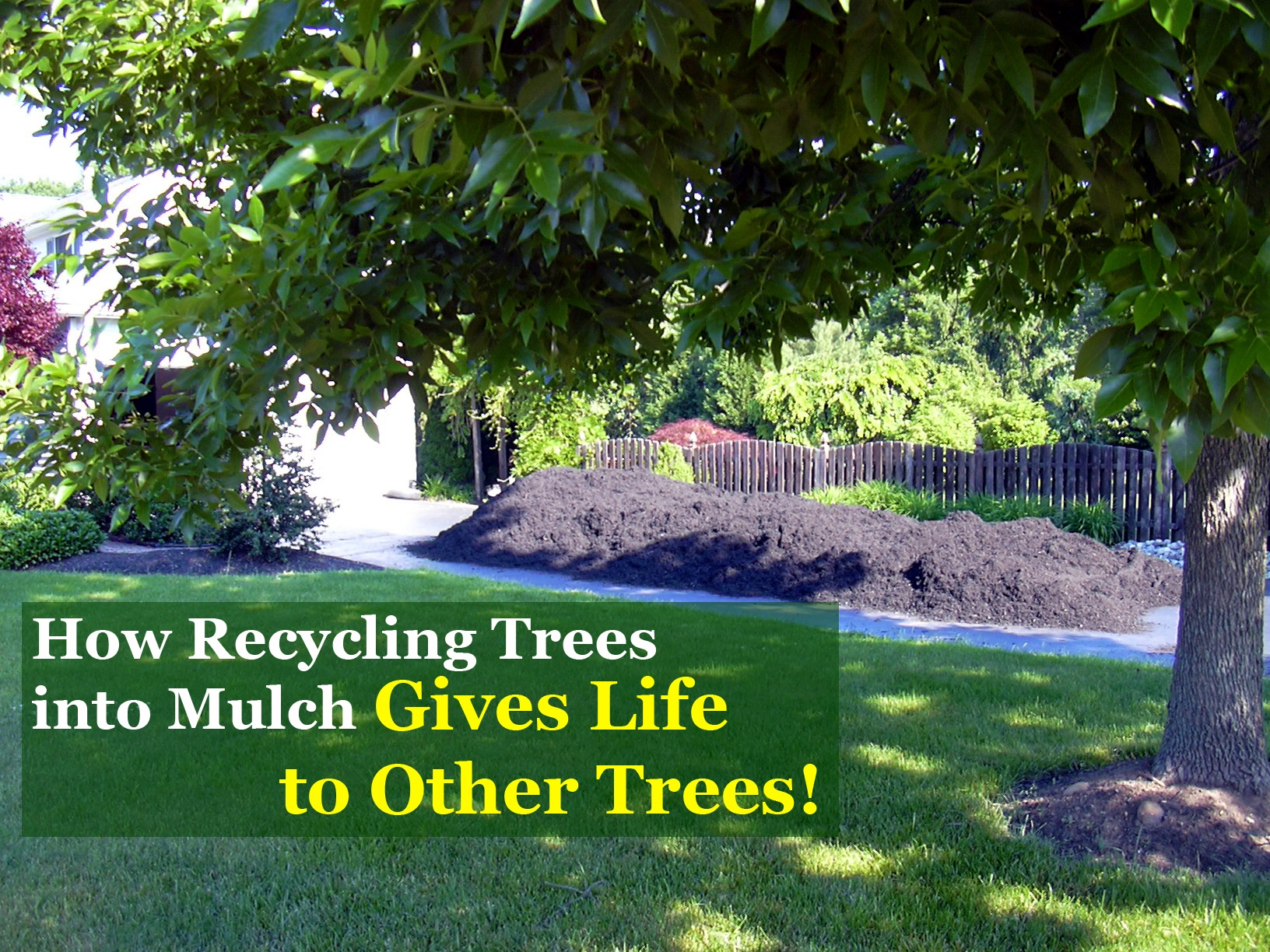 How Recycling Trees Into Mulch Gives Life To Other Trees Mulch Delivery