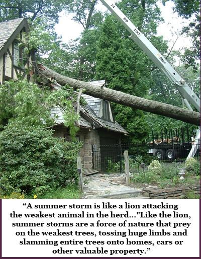 Pre-Storm Tree Inspection Prevent Summer Storm Damage