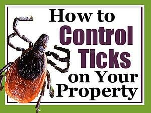How to Control Ticks on Your Property