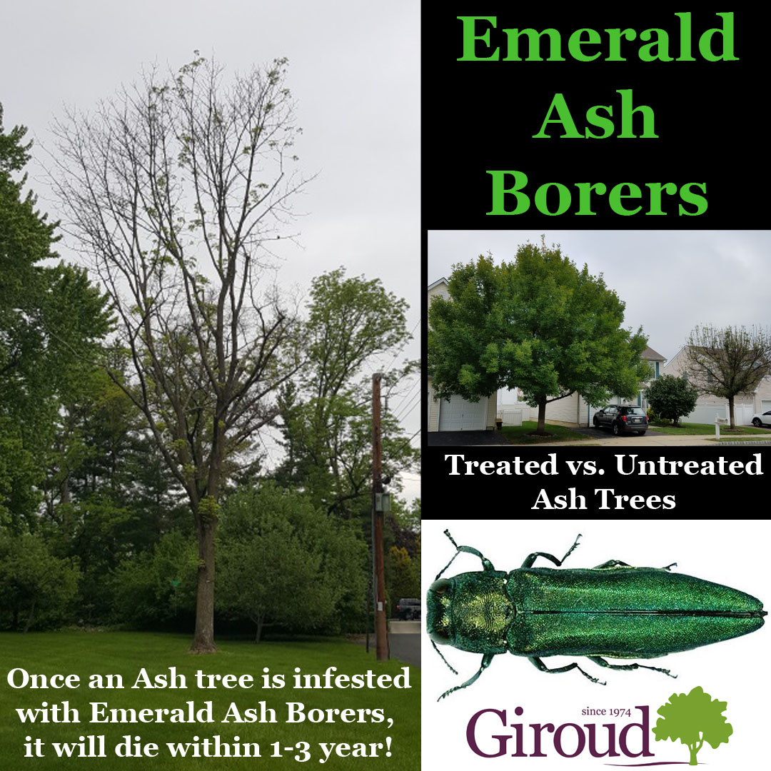 2018-Top-5-Damaging-Insects-You-Need-to-Watch-for-on-trees-and-shrubs-Emerald-Ash-Borers-Facts