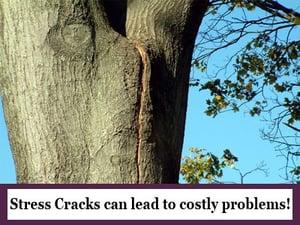 Cabling-Hubspot-cracks
