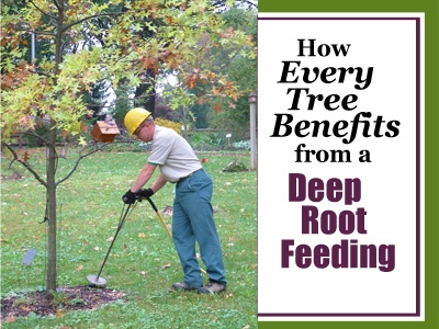 Every Tree Benefits from Deep Root Feeding