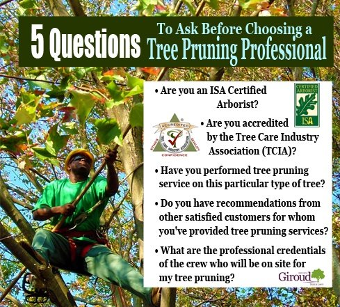 5 Questions to Ask before choosing a tree pruning professional