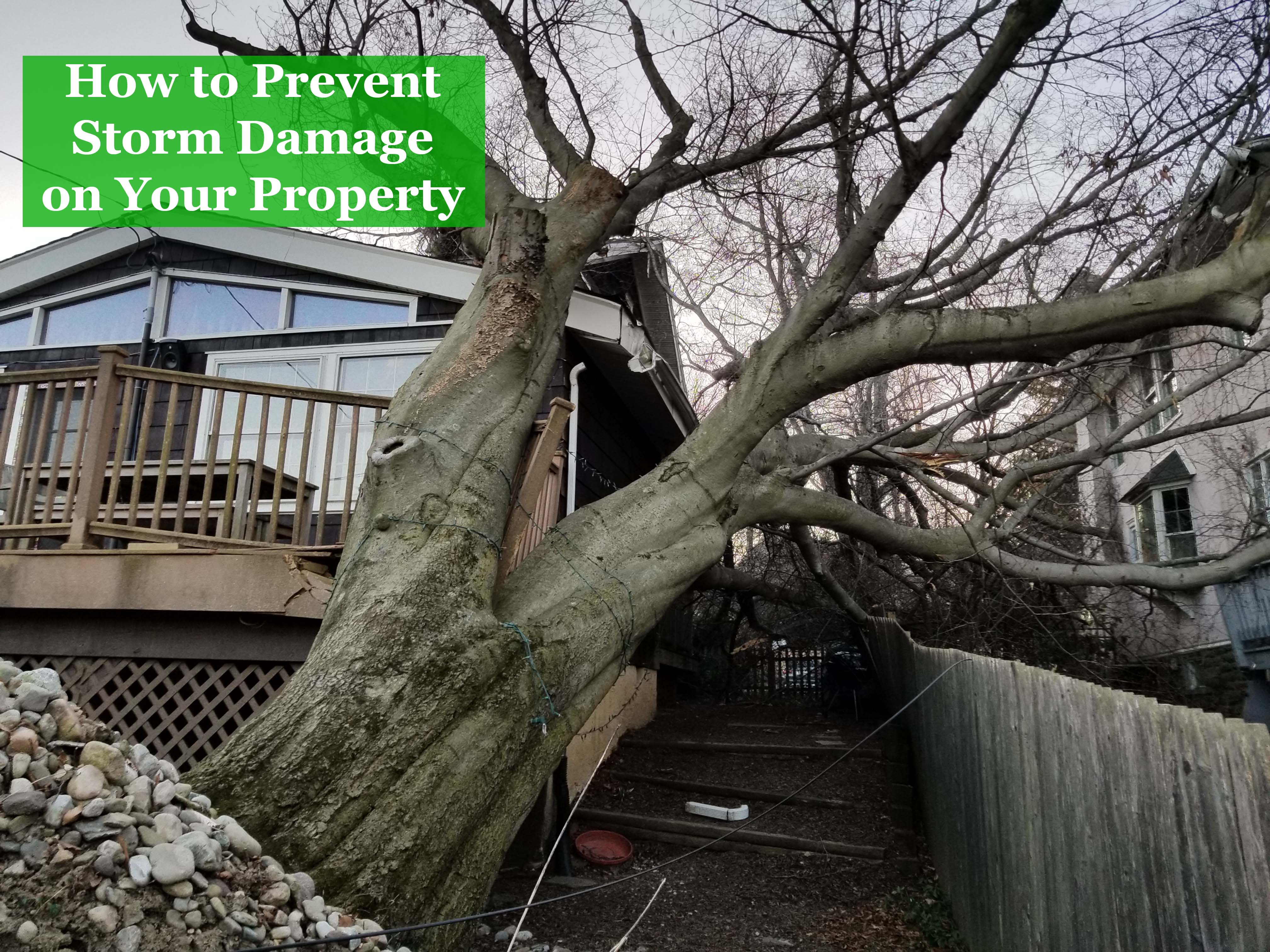 How to prevent storm damage on your property