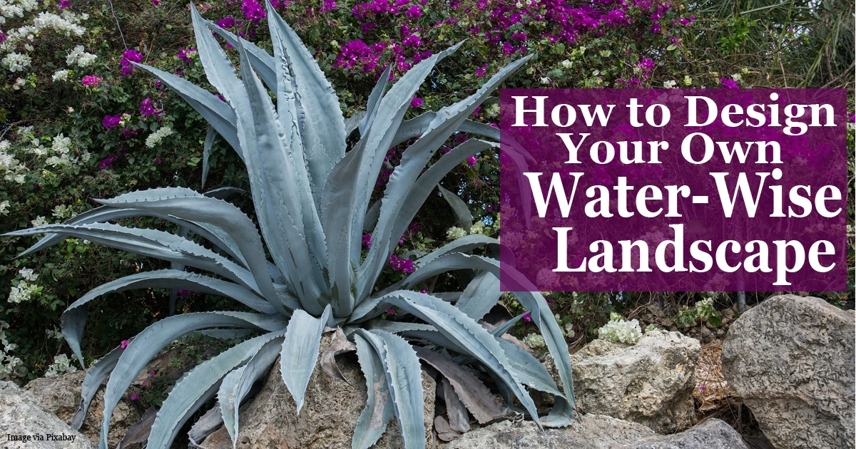 How to design your own water wise landscape