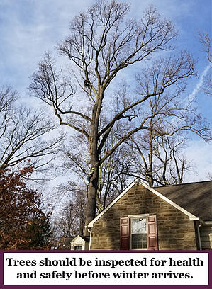 Inspect trees before winter