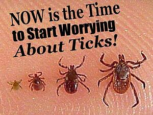 Now is the Time to start worrying about ticks- Hubspot
