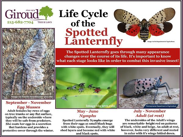 Why You Need to worry about Spotted Lanternfly Life Cycle
