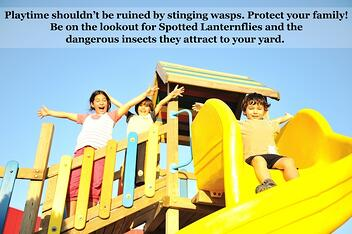 Protect your family from the stinging wasps that spotted lanterfly attract