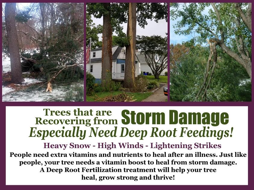 Storm Damaged trees need Deep Root Feedings