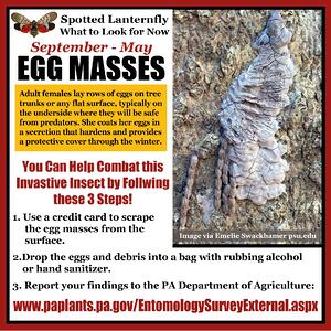 TO POST! SLF Egg Masses Instagram