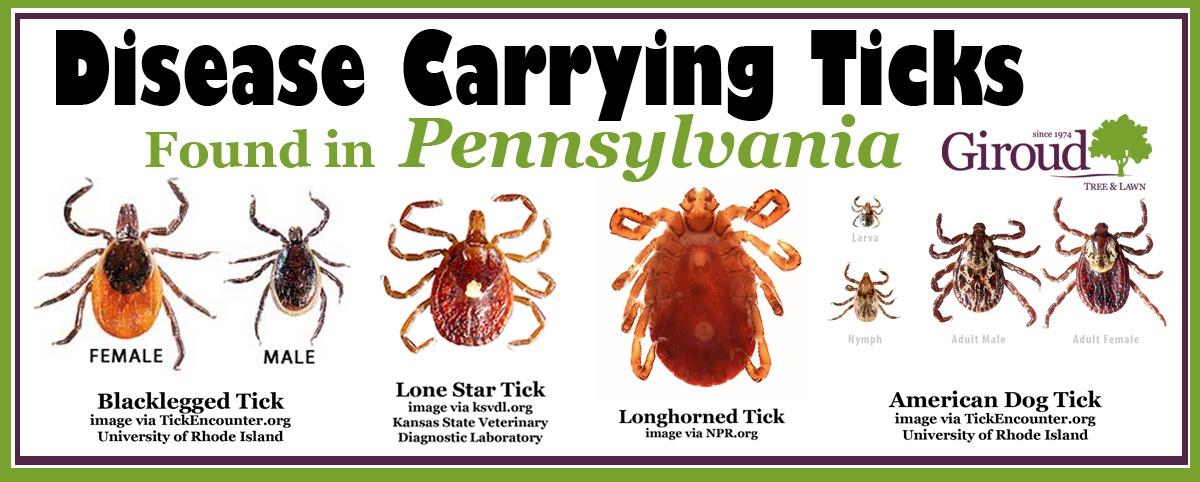 Disease Carrying Ticks in Pennsylvania