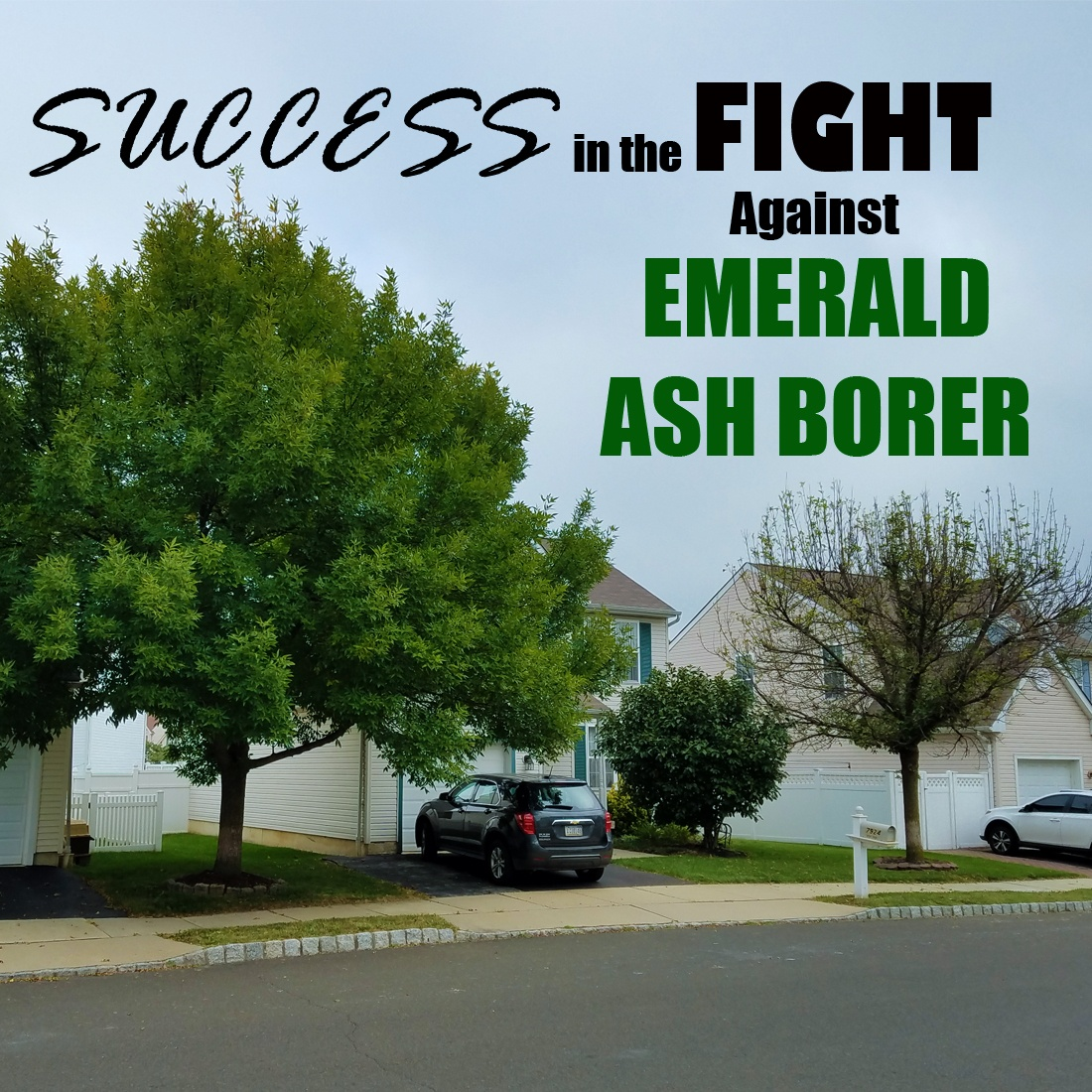 Success in the Fight Against Emerald Ash Borers