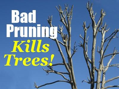 Bad Pruning Kills Trees