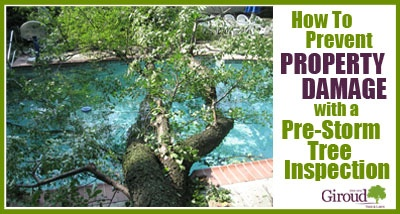 Pre-Storm Tree Inspection Prevent Summer Storm Damage