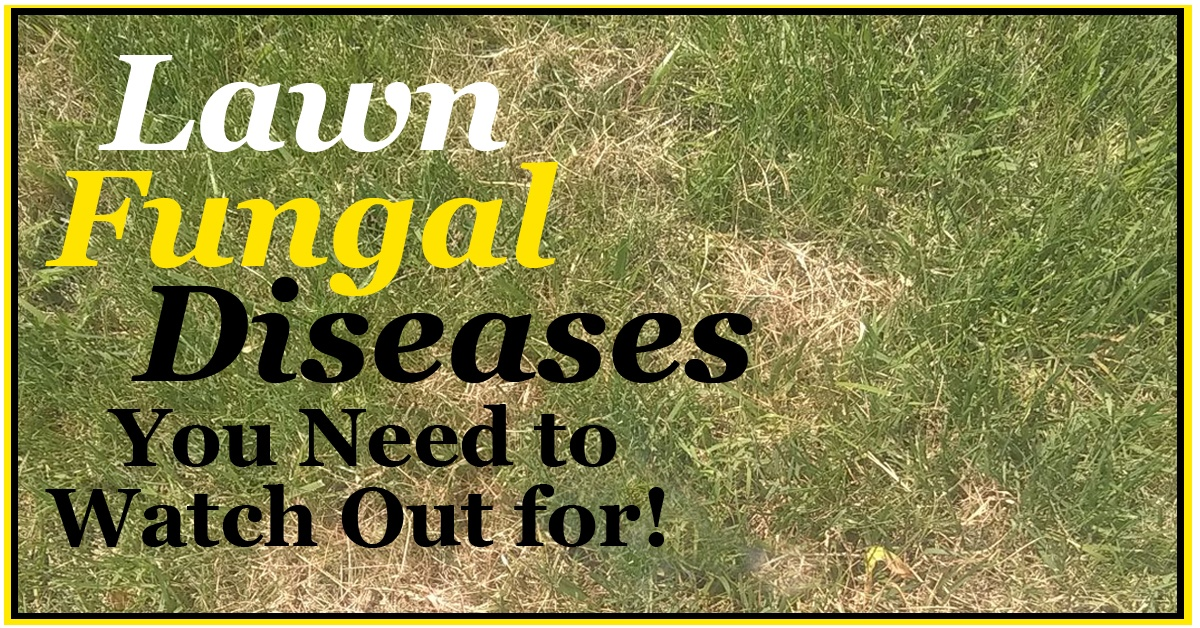 2018-Lawn-Fungal-Diseaseas-You-Need-to-Watch-Out-header