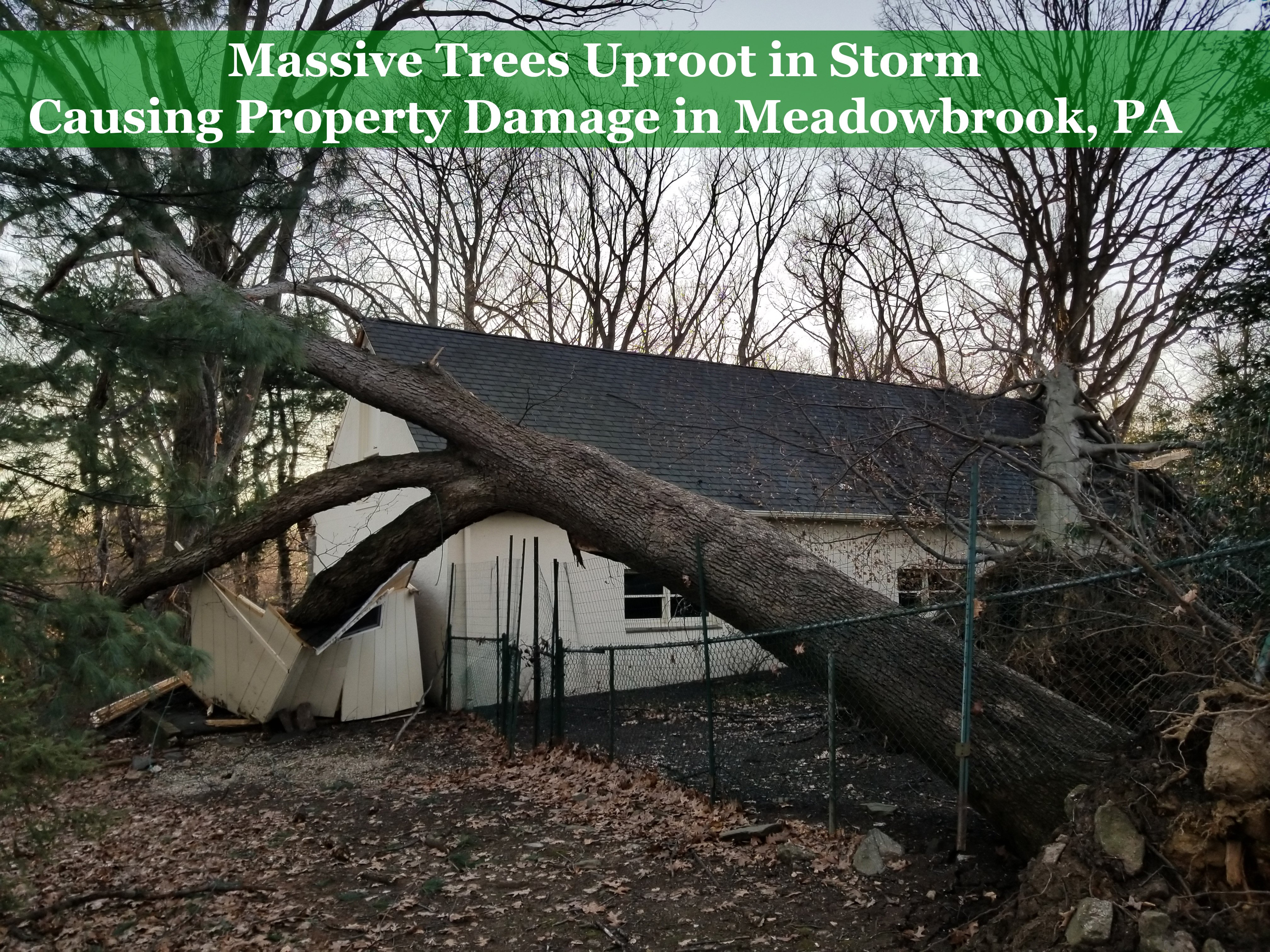 Massive Trees Uproot in Storm Causing Property Damage in Meadowbrook PA