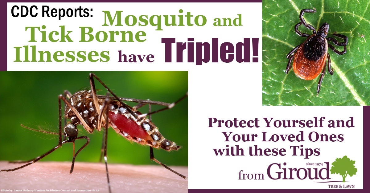 Mosquito and Tick Borne Illnesses have Tripled Protect Yourself Tips