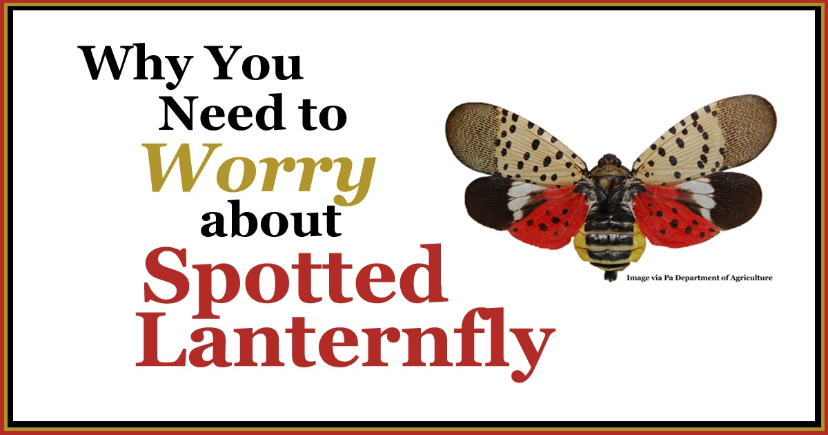 Why you need to worry about Spotted Lanternfly