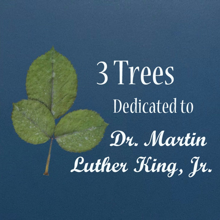 Dr. Martin Luther King Jr Tree.jpg