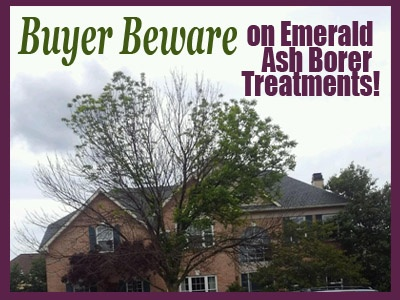 Buyer Beware on Emerald Ash Borer Treatments