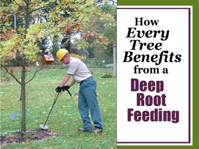Deep Root Feeding