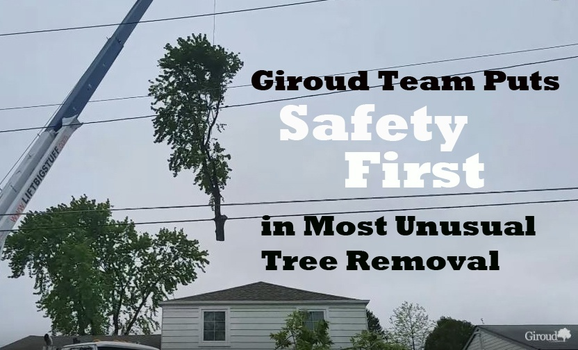 NorthEast-Philly-Tree-Removal.jpg