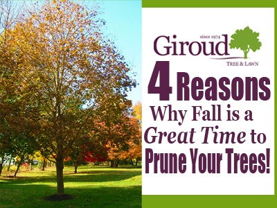 4 Reasons why fall is a great time to prune your trees