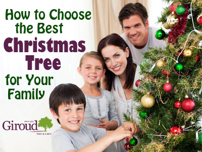 How to choose the best christmas tree for your family-Hubspot