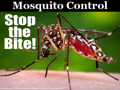 Mosquito-Stop-the-Bite