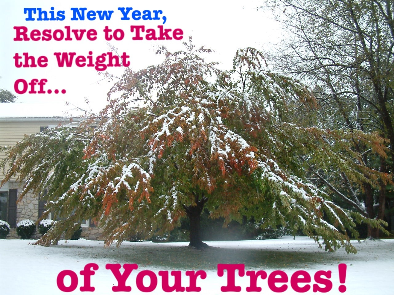 Resolve to Take The Weight Off of Your Trees Deadwood.jpg