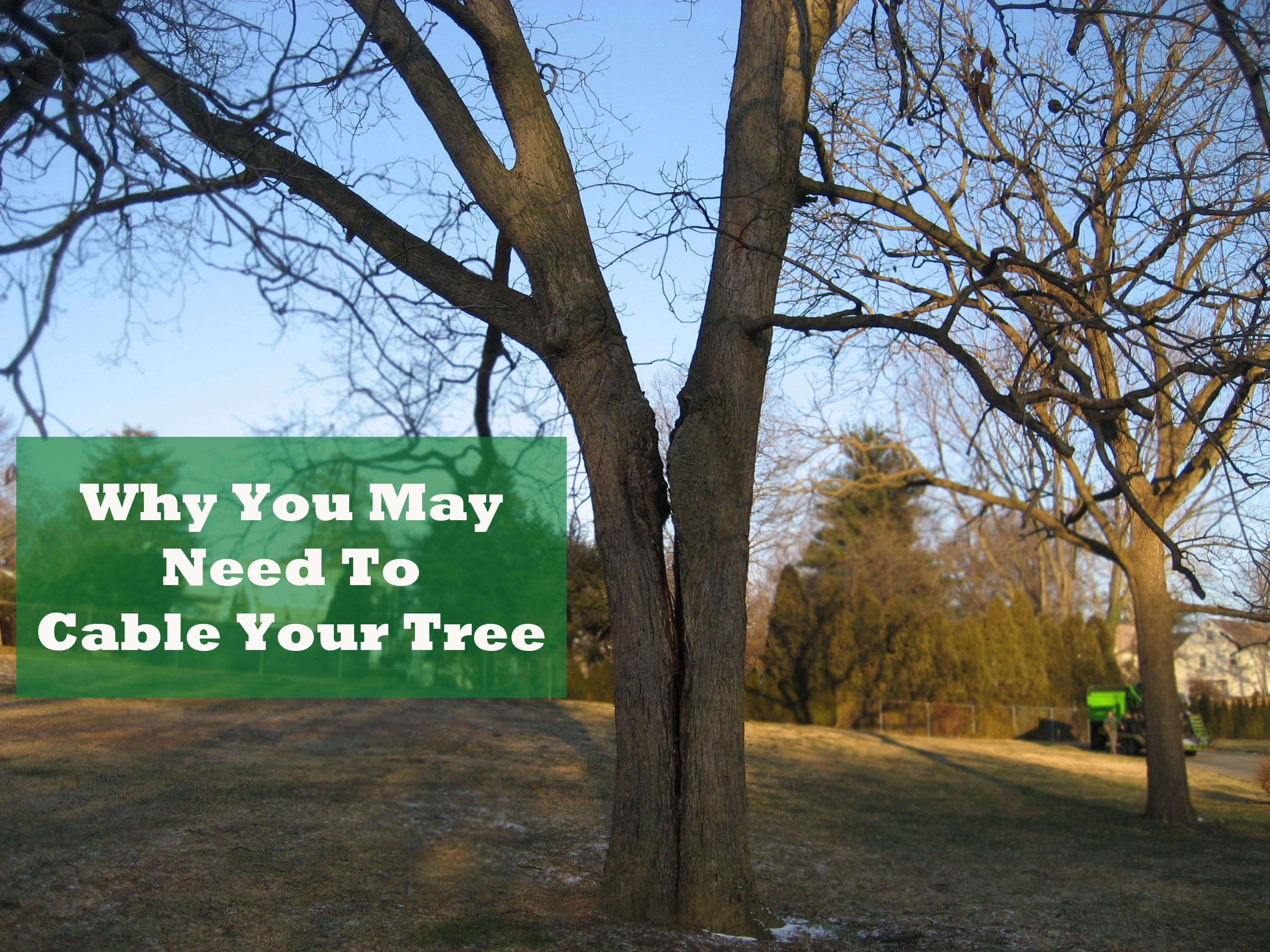 Why You May Need to Cable Your Tree.jpg
