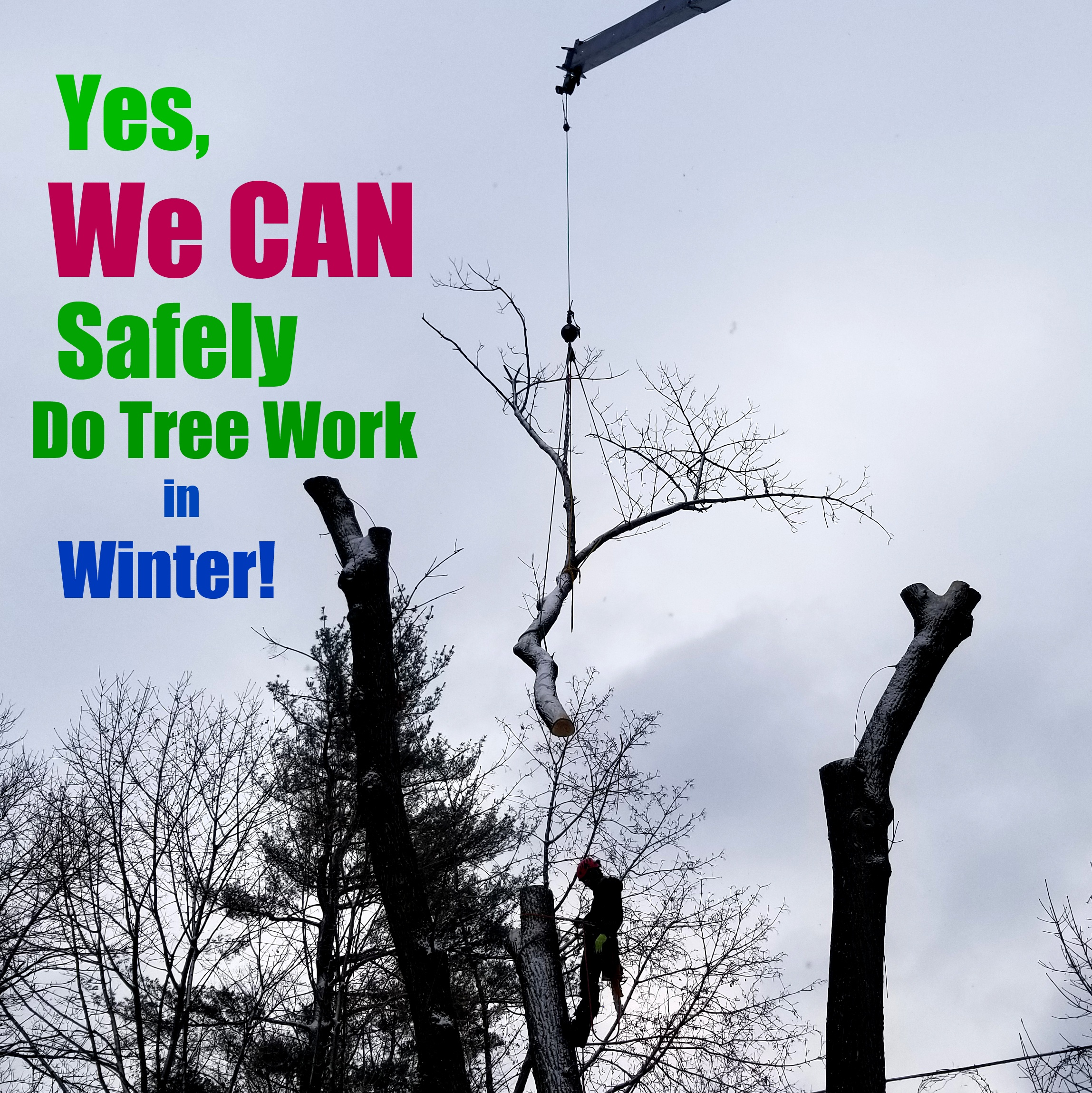 Yes We Can Safely Do Tree Work in Winter - crane removal.jpg