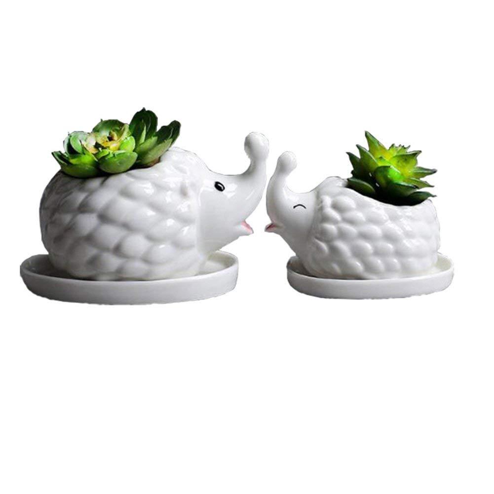 headgehog planter